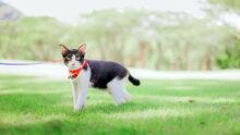 На сайте законодательных инициатив РОИ появился проект о площадках для выгула кошек