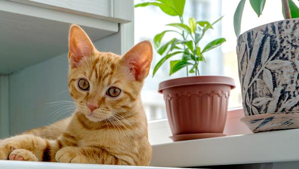 В Британии разработали предложения по облегчению съёма квартиры с животными