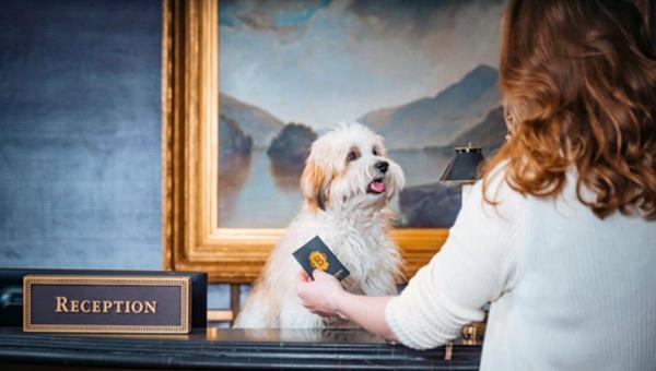 В США отели стараются заманить клиентов с домашними животными