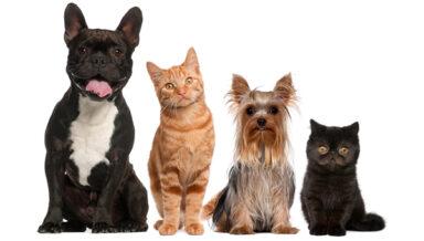 «Сбер» разработал систему распознавания животных
