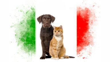 Опрос: больше всего в Италии любят собак