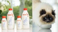 В США появилось новое лакомство для собак и кошек в виде молока