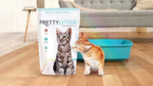 Mars Petcare приобретает компанию PrettyLitter Inc.