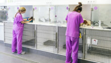 Московский комитет ветеринарии проведёт вебинар по обращению с животными