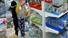 В Ачинске из зоомагазина украли кролика