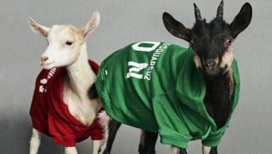Итальянский производитель одежды для животных Poldo Dog Couture в коллаборации с модным брендом Dsquared2 представил новую коллекцию
