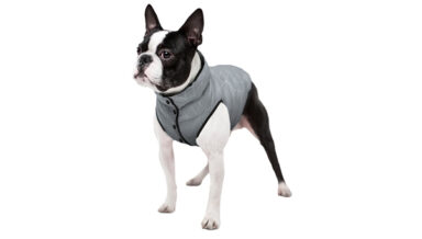 Collar выпустил светоотражающую одежду для собак