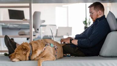 BARK опросил владельцев животных о последствиях пандемии и локдауна