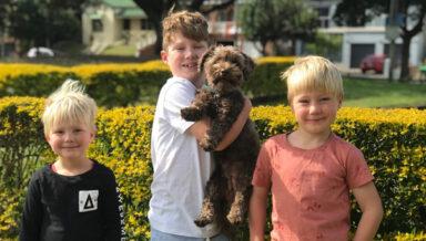 Австралийские страховщики определили самые популярные породы собак