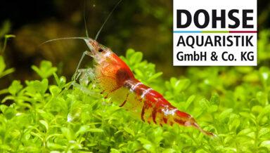 Немецкий производитель аквариумов Dohse Aquaristik расширяется