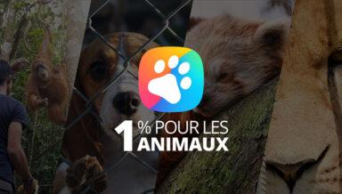 Производитель зоотоваров Zolux присоединился к проекту «1% для животных»