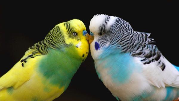 Похищенные из зоомагазина попугаи дорого обошлись преступнику