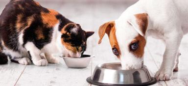 Россельхознадзор расширяет список разрешённых к ввозу кормов для животных