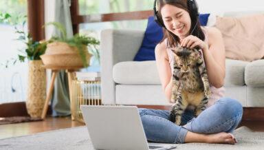 В Китае начали оказывать ветеринарную помощь онлайн еринарии