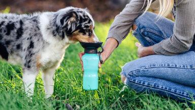 Удобную дорожную поилку для собак придумали в США