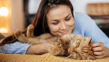 NAFI проанализировал траты россиян на домашних животных