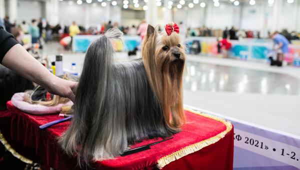 В конце октября в Подмосковье состоится Интернациональная выставка собак «Россия 2021»