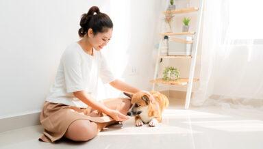 Журнал Petfood Industry составил рейтинг японских производителей кормов для животных