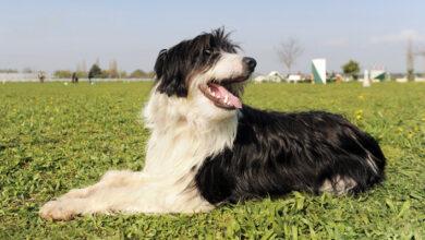 рентгенографическое исследование собаки