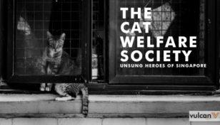 ветеринарная некоммерческой организации