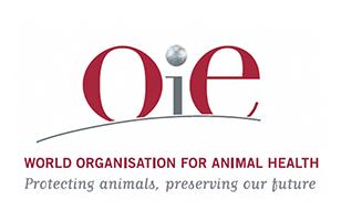 МЭБ представила данные по эпизоотической ситуации по особо опасным болезням животных