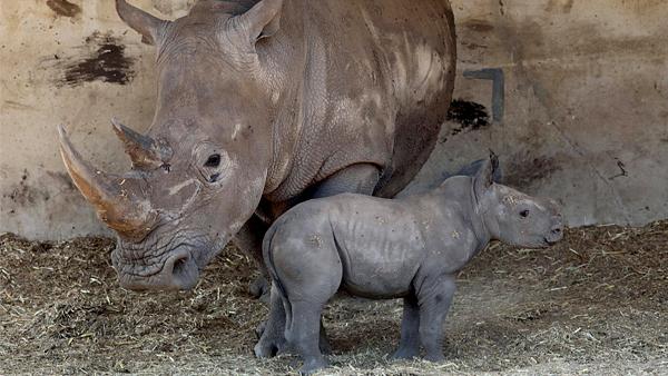 Клуб носорог в москве клуб канала им москвы икша