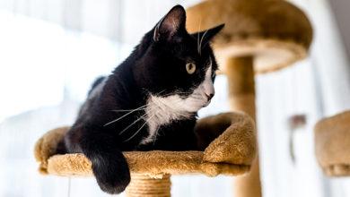 Законопроект, запрещающий проведение калечащих операций животным в нелечебных целях, был включён в «примерную программу» работы парламента на июнь 2021 года.