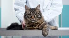 В Китае были усыплены три кошки из-за положительных результатов тестов на COVID-19