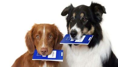 Поездка с собакой из России в США будет возможна только через ВГНКИ