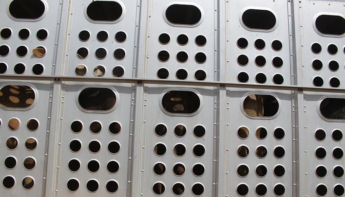 Проект консультаций с различными участниками сферы транспортировки животных в Евросоюзе