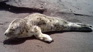 Продолжается работа по созданию реабилитационного центра для морских млекопитающих