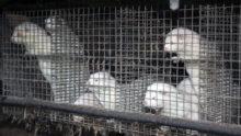 МЭБ информирует о новых случаях SARS-CoV-2 у домашних животных