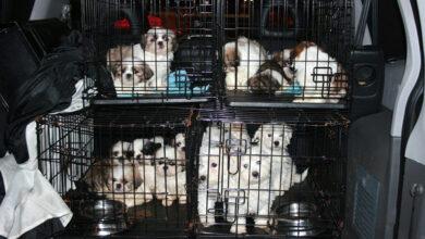 Незаконная торговля животными может привести к «закрытию» Евросоюза для России