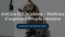 AniCura запустила новый образовательный проект – Академию ветмедицины