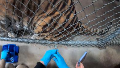 В Оклендском зоопарке проводят вакцинацию животных от COVID-19