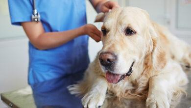 лучший ветеринарный врач