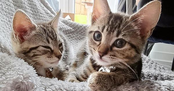 В Великобритании прооперировали котёнка без ануса