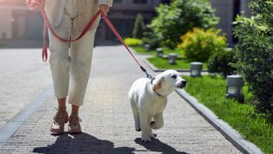 Специалисты заявили о проблемах социализации у многих «пандемийных» животных