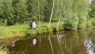 Ветврачи Ленинградской области будут бороться с цианобактериями