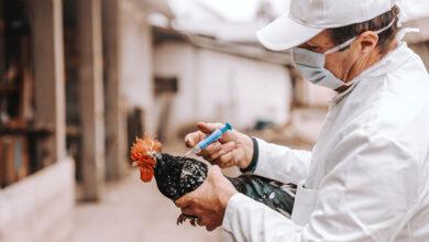 Институт Пирбрайта разработал вакцину от гриппа птиц