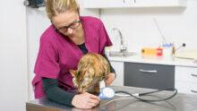 В рамках инициативы Mercury Challenge 10 тысячам кошек измерили давление