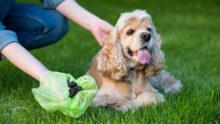 В Тель-Авиве владельцев обязали регистрировать ДНК своих собак в муниципалитете