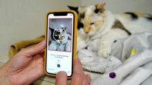 Разработано приложение, «видящее» боль на изображениях кошек
