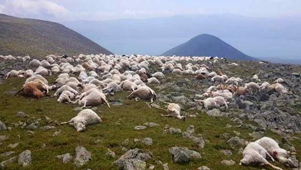 В Грузии молнией убило более 500 овец