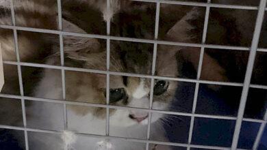 В Тайване власти усыпили 154 кошки