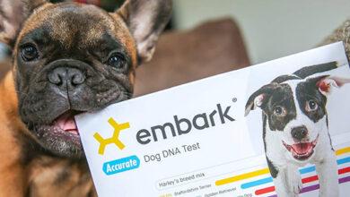 Создатель ДНК-тестов для собак получил $75 млн инвестиций