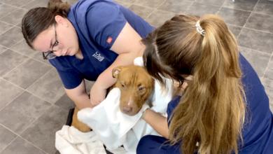 Школа во Флориде сотрудничает с приютом для животных