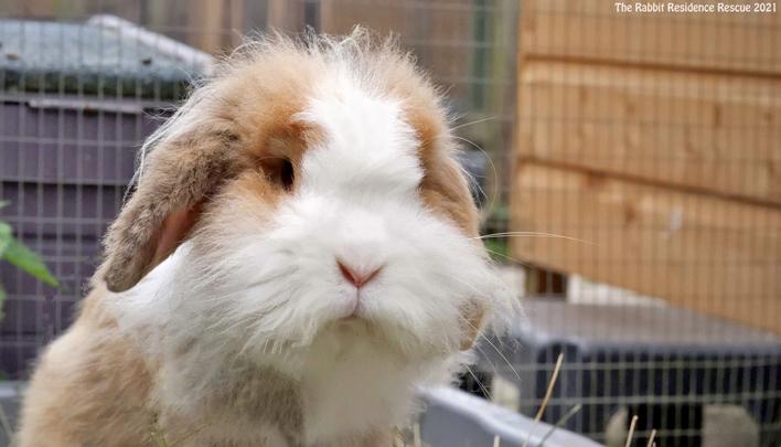 взять кролика