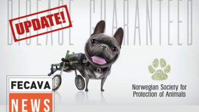 В Норвегии парламент обязал клубы собаководства отвечать за здоровье разводимых животных