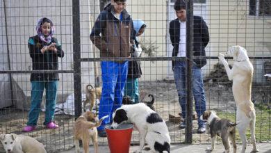 Приют для собак Nowzad сможет выехать из Афганистана